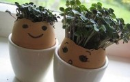 Grow your own tiny, edible plants all year round.