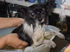millie-bath