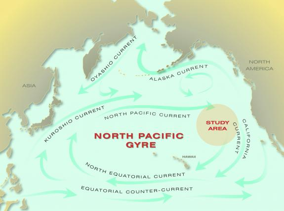 north pacific gyre_002