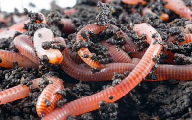 How to make your own worm farm