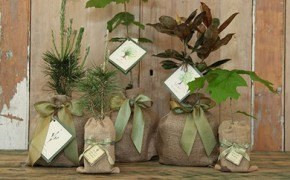 Green Weddings – Part 7 – The Gift Registry & Favours