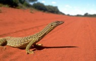 Round up: Eco Tourism WESTERN AUSTRALIA