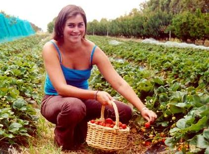 Pick-your-own fruit and vege farms in Australia