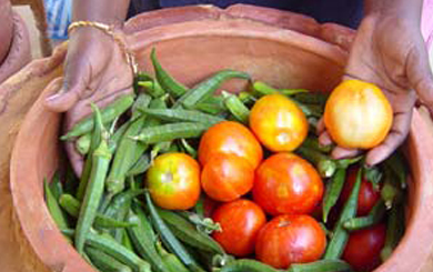 In a zeer pot, vegetables are protected from the heat. Tomatoes and carrots can last up to twenty days while okra will last for seventeen days. (Photo credit: Practical Action)