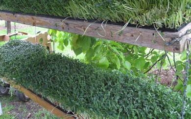 Sprouts and microgreens – the veges that anyone can grow