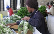 Innovation of the Week: From the Township Garden to the City Table