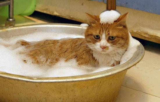Daily hygiene sacrificed for the environment?