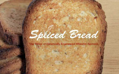 Spliced Bread: GE wheat coming to a store near you