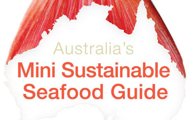 Sustainable Fish Guide – Say No, Think Twice or Better Choice