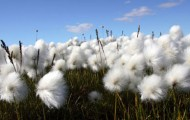 The New Cotton Debate: What is sustainable cotton?