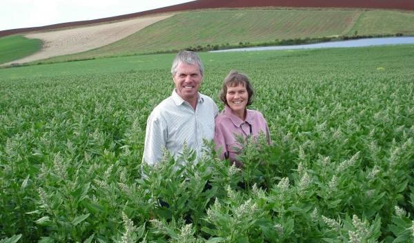 Growing quinoa in Australia