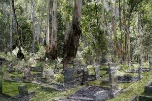 Green burials where graves are marked by GPS coordinates instead of a headstone. Image Susannah Singh