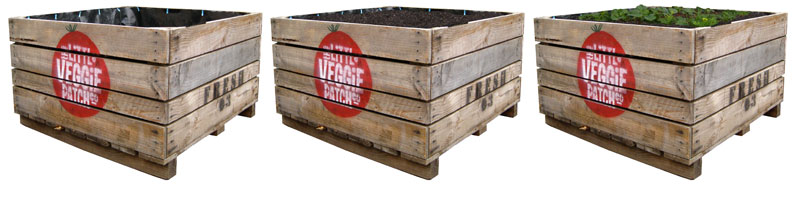 Little Veggie Patches Delivered To Your Door My Green Australia