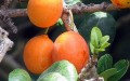 Reducing Food Waste: Making the Most of Our Abundance