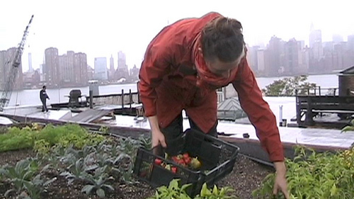 Farming the cities, feeding an urban future
