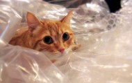 cat-in-plastic