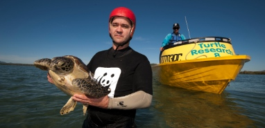 Turtle crisis looms for Great Barrier Reef