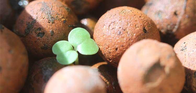 Raising Aquaponic Seedlings For The Lazy