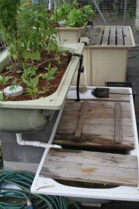 This bathtub aquaponics system is a low tech solution