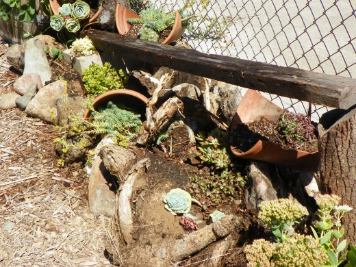 Creating a wildlife-friendly backyard | My Green Australia