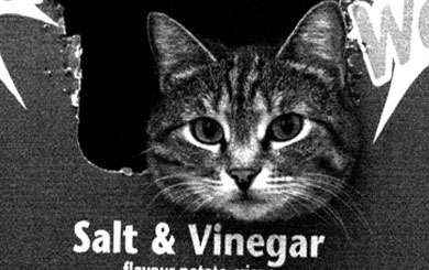 Salt and Vinegar Cat