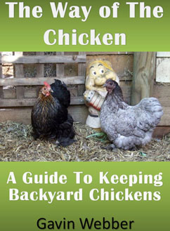 The Way Of The Chicken – A Guide To Keeping Backyard Chickens by Gavin Webber